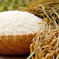 コシヒカリ一般米